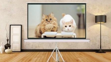 科普:家用投影仪幕布都有什么类型?