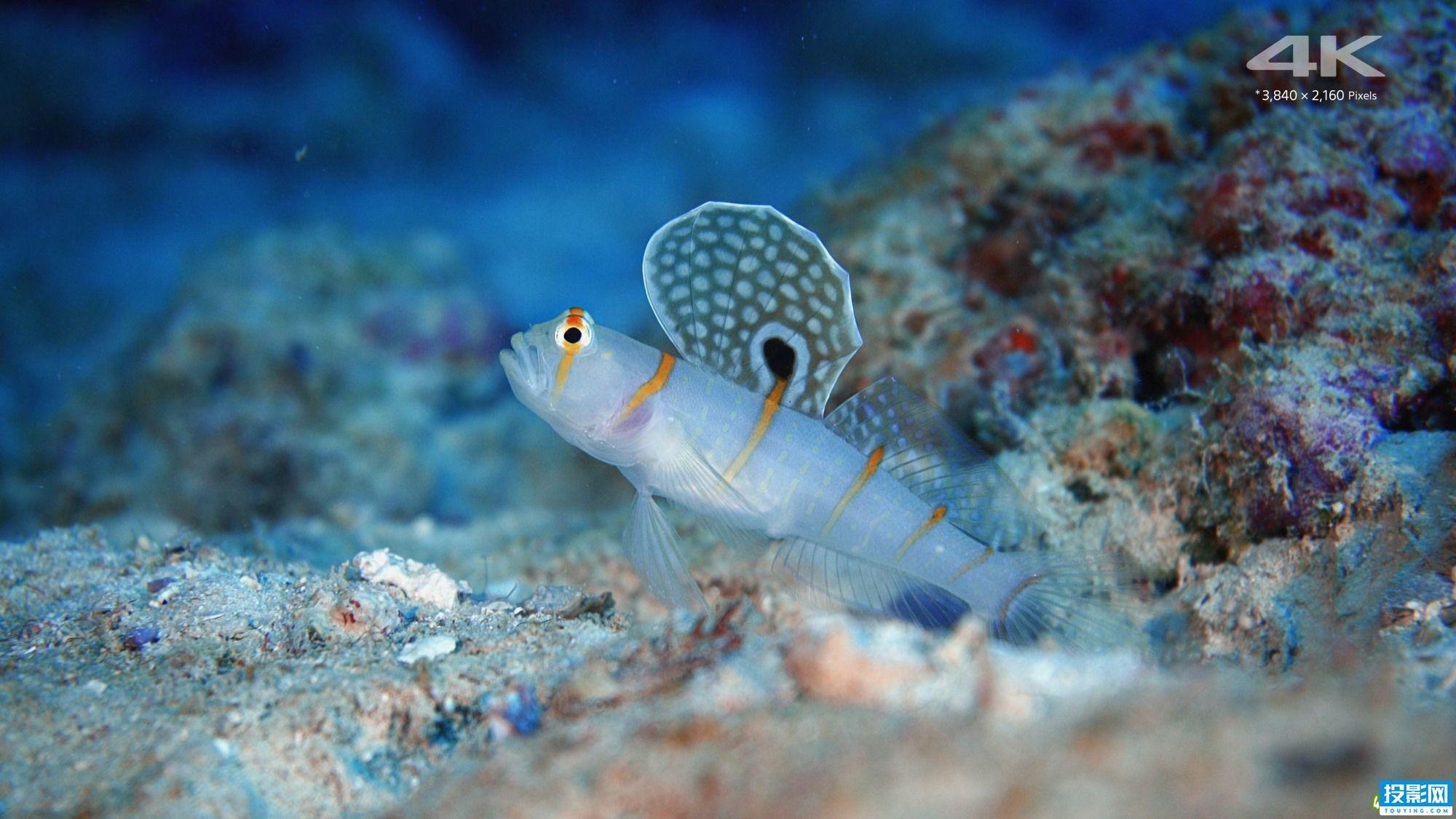 冲绳美丽海水族馆,奇妙海底世界