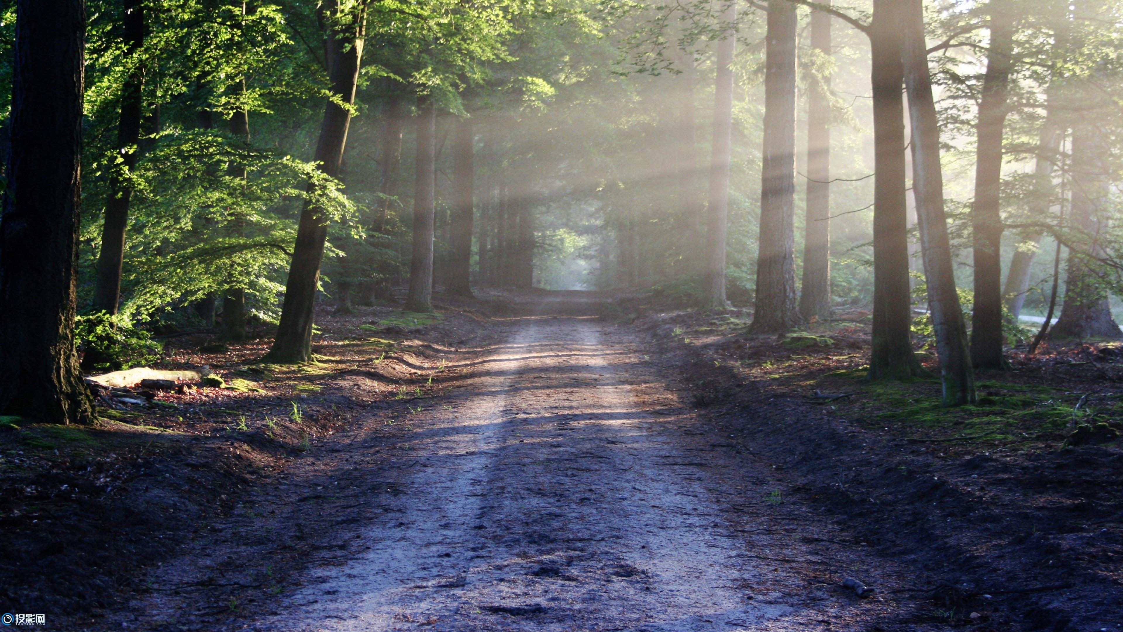 4K 森林风景图片11P [分辨率3840x2160x27.3MB]