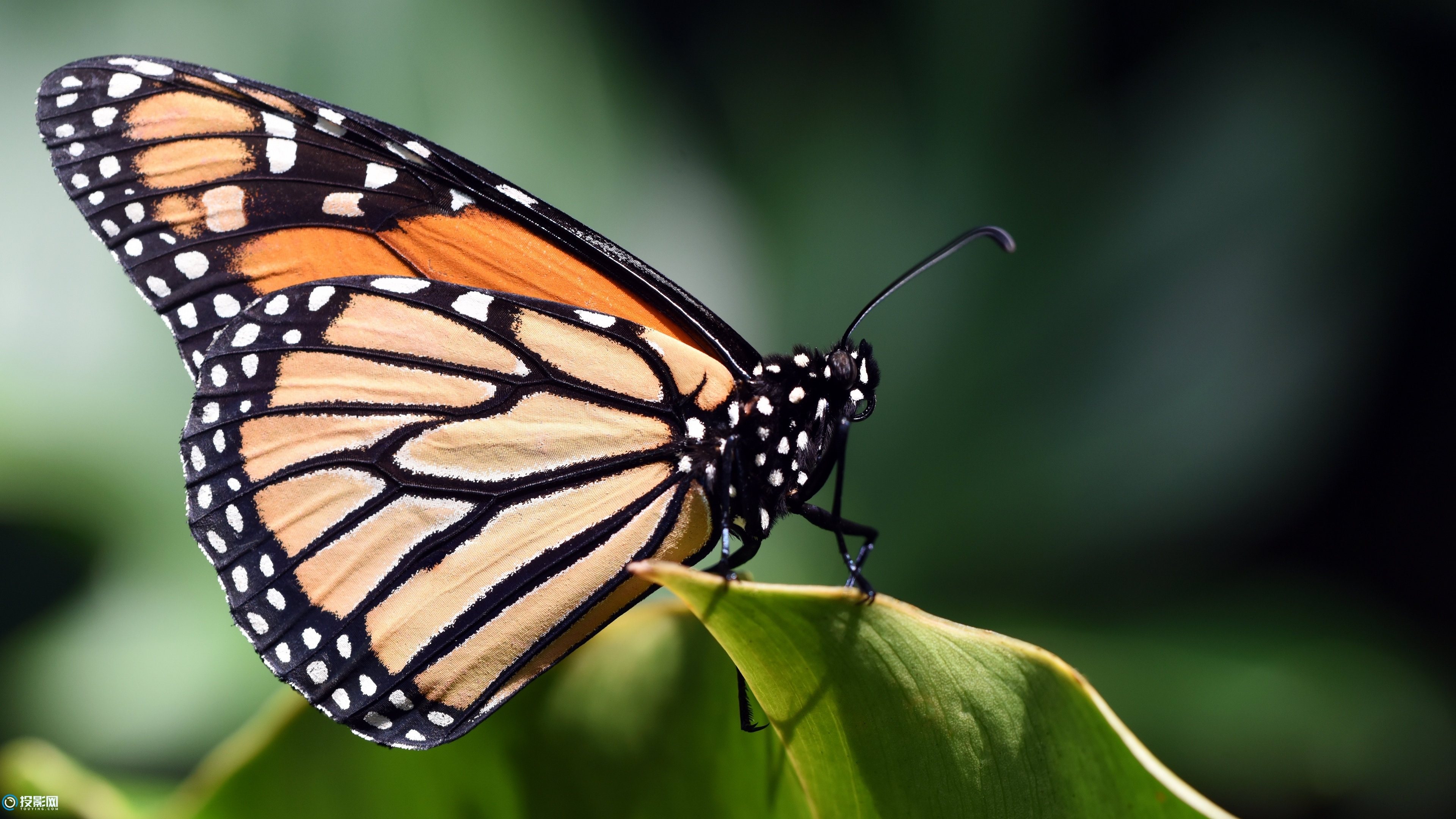 4K 蝴蝶图片大全壁纸16P [分辨率3840x2160x14.4MB]