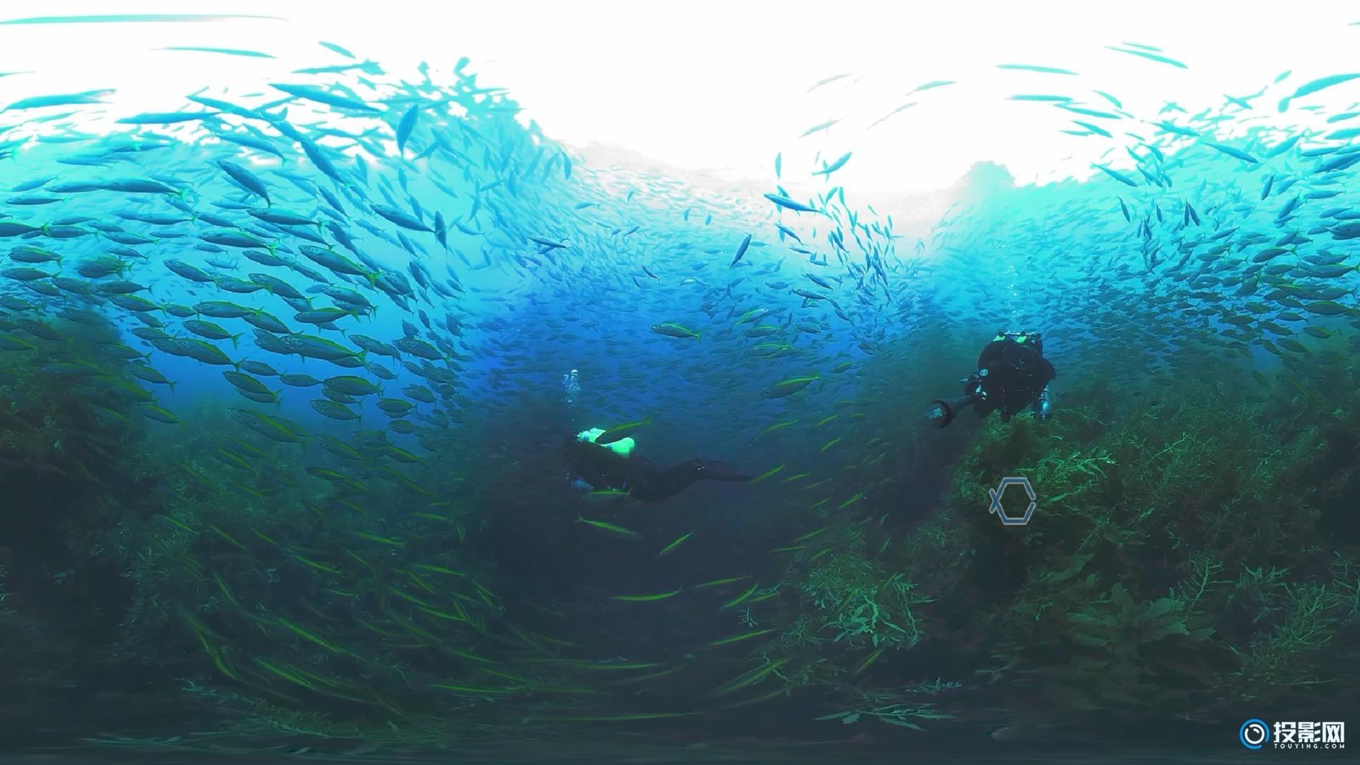 [VR360°全景] 被鱼群环绕是什么体验 VR视频下载